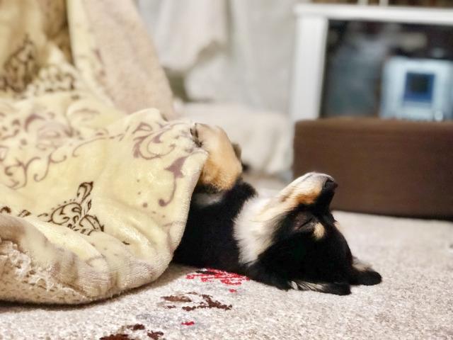 落ち と は 寝