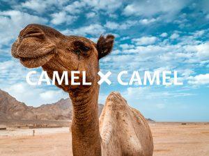 CAMEL×CAMEL